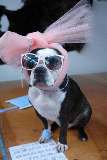 Mood Fabrics dog