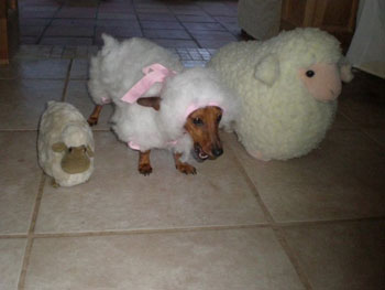 Jessica M.'s Sheep Costume for Coco