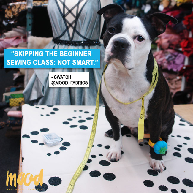 Swatch, Mood Fabrics' mascot, is in training to be the next Tim Gunn.