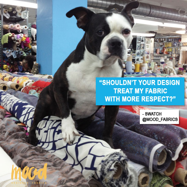 Swatch, Mood Fabrics' mascot, is in training to be the canine Tim Gunn.
