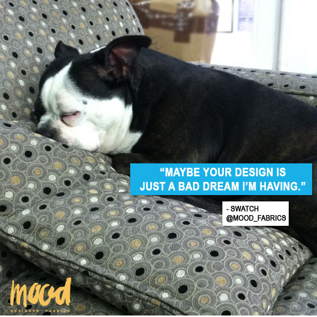 Swatch, Mood Fabrics' mascot, is training to be the canine Tim Gunn.